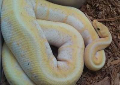 banana-spinner-python