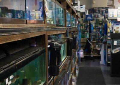 fish-aquariums