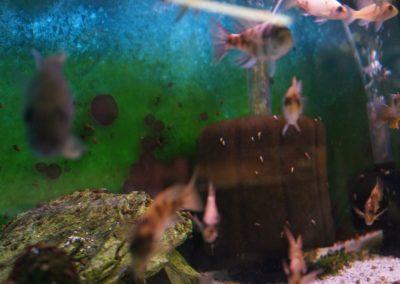 fishes-in-aquarium