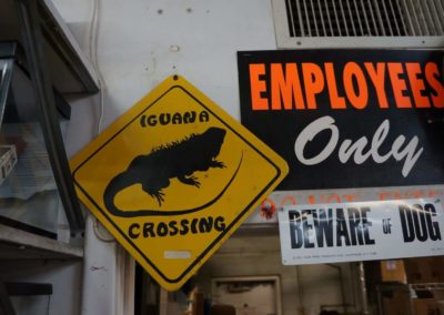 iguana-crossing