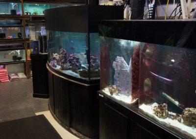 large-aquariums