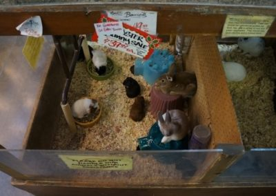 rabbits and hamsters