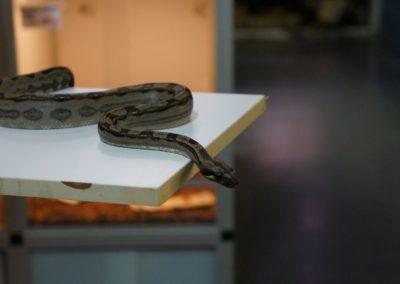 snake-13