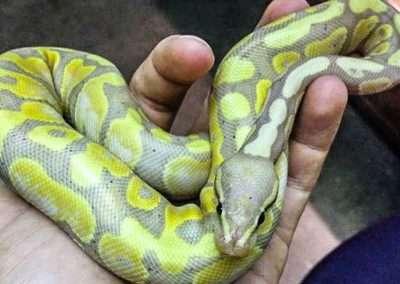 snake-171