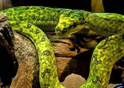 snake-174