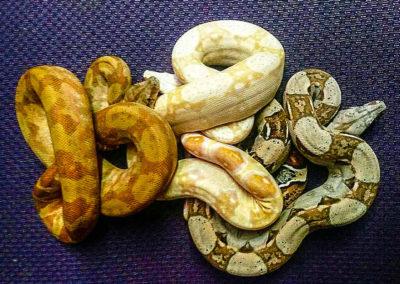 snake-177