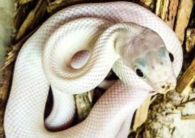snake-178